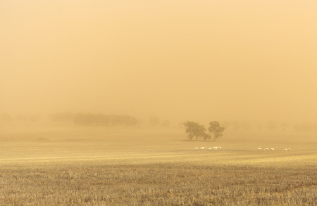 Dust storm blowing over the agricultural fields between Wagga Wagga and Temora, New South Wales Imagens - 100370823