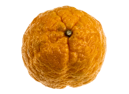 Gold nugget is a mandarin variety, medium in size, oblate in form with a bumpy orange rind. The flesh is bright orange, finely-textured, and seedless. The flavor is rich and sweet.