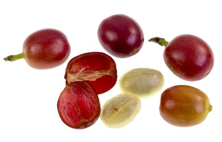 Vue d'une anatomie de fruit de cerise de café frais avec la section extérieure composée par la peau et la pulpe, en rouge sur l'image, et la section intérieure ou graine avec deux moitiés adjacentes couvertes par le mucilage