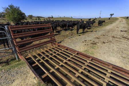 View of a cattle grid, known as a stock grid, to prevent livestock from passing openings along a road in a cattle property in New England region, northern New South Wales, Australia
