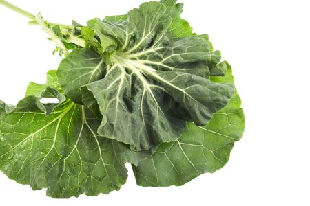 Collard, or Couve Galega in Portugal, is a cultivar of Brassica oleracea used to make the popular Portuguese soup Caldo Verde (Green Broth), in which the leaves are sliced into strips 1-2mm wide.
