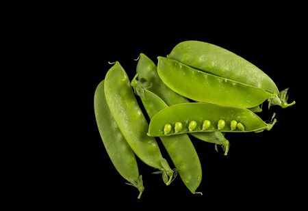 Snow pea, Pisum sativum var. saccharatum, in a black background. It is a variety of pea which is eaten whole in its pod while still unripe.