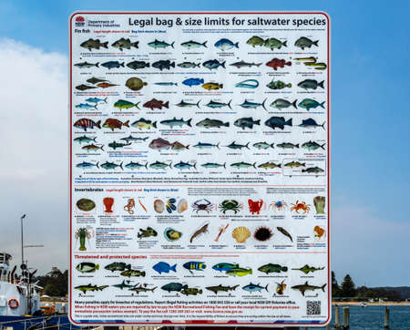 Chart of legal bag and size limits for saltwater species current in use in New South Wales, Australia