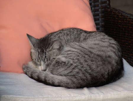 Cute kitty sleeping on a pillow on a chair photo