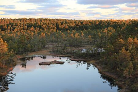 bogs: Aerial view of Lahemaa bogs at sunrise Stock Photo