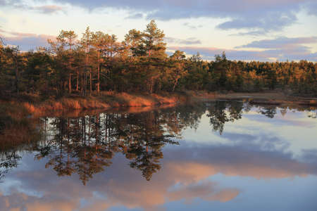 bogs: Dawn reflections of pines in the water of bogs in Estonia