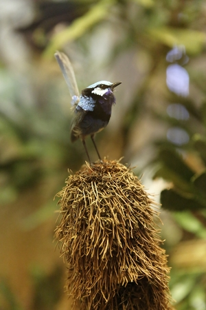 Small exotic bird with blue feather on the vertical nest Reklamní fotografie