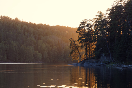 Sunset over the Olhava lake in Finland with backlit pine trees