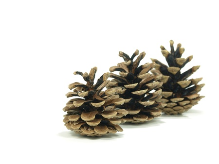 pine three: three pine tree cones on white background