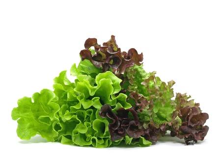 lollo rosso and batavia lettuce on white background Zdjęcie Seryjne