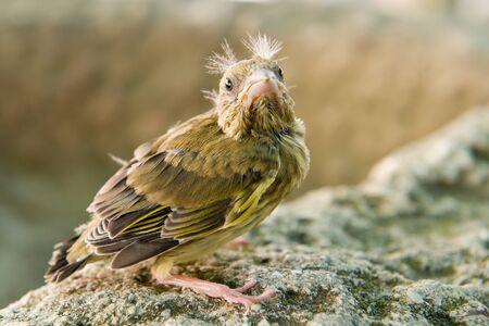 young bird: Young bird looking at the camera