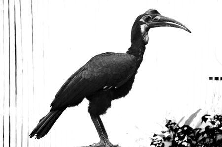 beak: Sideshot of a hornbill, a beautiful bird with a horn on its beak Stock Photo