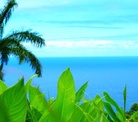hojas: Plants and sea