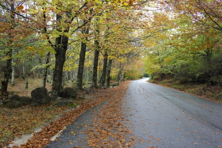 Colorful autumn trees on a winding country road Stock Photo - 17084772
