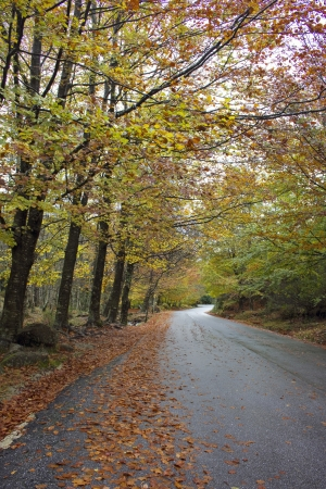 Colorful autumn trees on a winding country road Stock Photo - 17084783