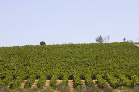vineyards in douro, Oporto,  Portugal photo