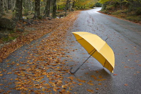 Colorful autumn trees and umbrella on a winding country road photo