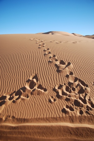 Footsteps in the desert Stock Photo - 8661620