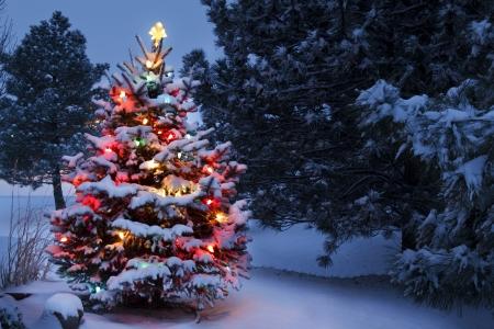christmas lights: L'Albero di Natale innevato spicca vivacemente contro i toni blu scuro della luce del mattino in questa scena di inverno