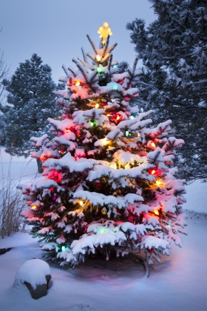 christmas morning: This Snow Covered Christmas Tree stands out brightly against the dark blue tones of this snow covered scene  Stock Photo