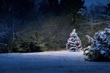Dit Besneeuwde Kerstboom onderscheidt zich fel tegen de donkerblauwe tinten van deze besneeuwde scène Het licht lijkt bijna magisch als het verlicht de omringende scene