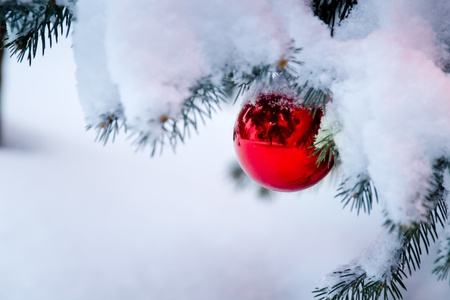 reflects: This bright red ornament hanging from a snow covered Christmas Tree Branch reflects its outdoor snowy surroundings  Stock Photo