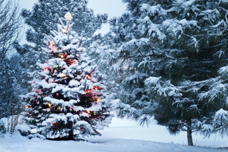 the trees covered with snow: This Snow Covered Christmas Tree stands out brightly against the dark blue tones of this snow covered scene  Stock Photo