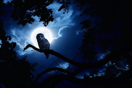 white owl: This is a photo illustration of a quiet night, a bright moon rising over the clouds illuminates the darkness, and a Barred Owl sits motionless in the blue moonlight  slight diffuse glow added to enhance scene  All my own components in this photo