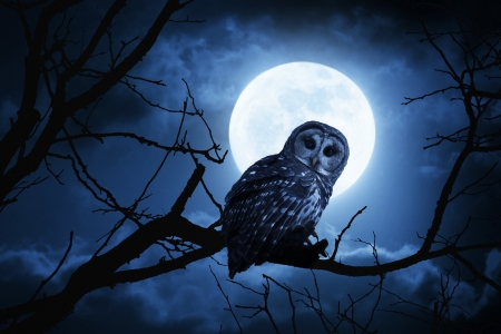 This is a photo illustration of a quiet night, a bright moon rising over the clouds illuminates the darkness, and a Barred Owl sits motionless in the blue moonlight  slight diffuse glow added to enhance scene  All my own components in this photo Фото со стока - 21908263