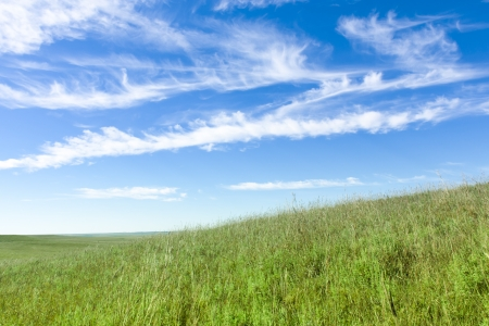 This serene and beautiful pasture landscape of the midwest tallgrass prairie with the undulating hills, lone tree, waves of blowing grass, deep blue sky and rich green colors makes for a marvelous view Фото со стока - 22149399