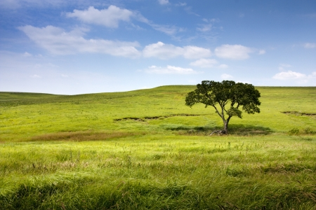 This serene and beautiful pasture landscape of the midwest tallgrass prairie with the undulating hills, lone tree, waves of blowing grass, deep blue sky and rich green colors makes for a marvelous view