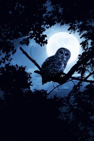Dit is een foto illustratie van een rustige nacht, een heldere maan die over de wolken verlicht de duisternis, en een Gestreepte uil zit roerloos in het blauwe maanlicht lichte diffuse gloed toegevoegd aan scène versterken Al mijn eigen onderdelen in deze foto