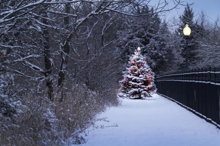 Dit Sneeuw Behandelde Kerstboom onderscheidt zich fel tegen de donkerblauwe tinten van deze besneeuwde scène en smeedijzeren hek