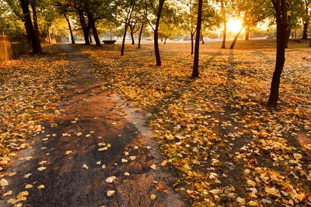 walking path: This serene walking path at sunrise in Autumn is lined with bright yellow fall leaves  Long shadows of the trees are cast from the rising sun, adding great lines and textures  Stock Photo