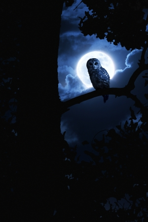 barred: This is a photo illustration of a quiet night, a bright moon rising over the clouds illuminates the darkness, and a Barred Owl sits motionless in the blue moonlight  slight diffuse glow added to enhance scene  All my own components in this photo