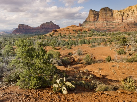Hiking trails in Sedona Arizona leads to many amazing red rock formations and desert cactus
