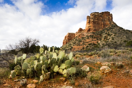 Hiking trails in Sedona Arizona leads to many amazing red rock formations and desert cactus Фото со стока - 22177153