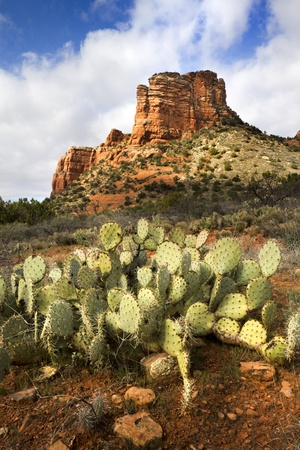 Hiking trails in Sedona Arizona leads to many amazing red rock formations and desert cactus Stock fotó - 22177154