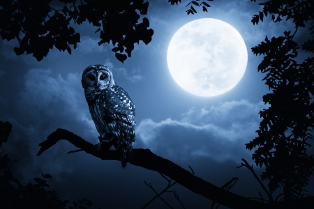 Quiet Halloween Owl At Night With Bright Full Moon In Sky