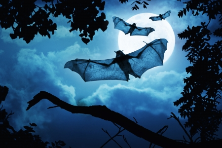 Creepy Bats Fly In By A Full Moon For Halloween Night