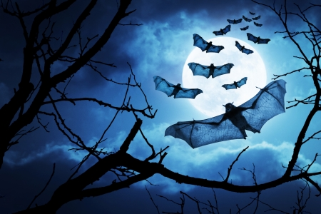 nocturnal: Creepy Bats Fly In By A Full Moon For Halloween Night