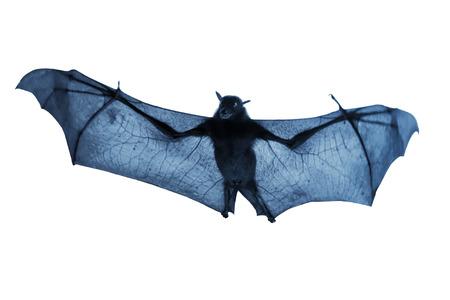 Creepy Blue Nighttime Flying Halloween Bat Isolated On White Фото со стока - 23327990
