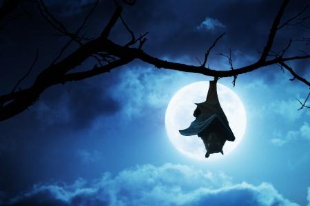 Deze griezelige Halloween Vleermuis hangt ondersteboven van een gebroken boom tak met een heldere, volle maan en wolken