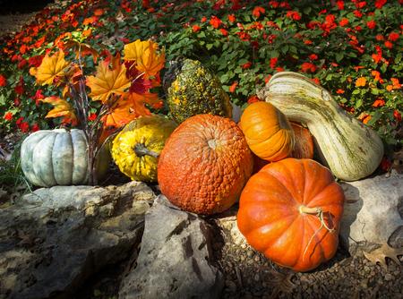 Colorful Thanksgiving Garden Arrangement For Fall Фото со стока - 24462954