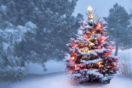 arboles de navidad esta nieve al aire libre decorado cubierto de rboles de navidad brilla