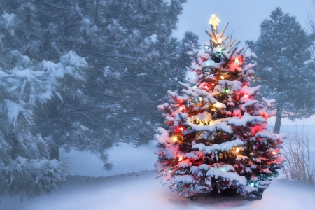 decorated christmas tree: This decorated outdoor snow covered Christmas Tree glows brightly on this foggy Christmas morning