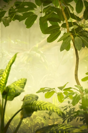 jungle scene: This misty tropical jungle scene would make a great variety of projects
