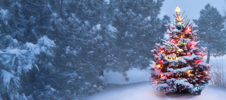 xmas background: This decorated outdoor snow covered Christmas Tree glows brightly on this foggy Christmas morning