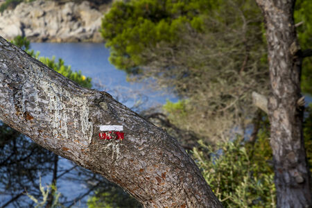 long distance: Signal of the GR2 long distance trail on the bark of a tree. Rampart walk in the Costa Brava, Spain. Stock Photo