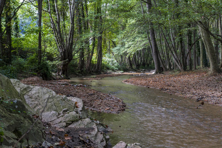 riverside trees: In the Natural Park of Montseny (Barcelona), a quiet brook runs between the riverside trees
